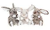 Cuddly Toy Rabbit