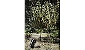 Spotlight Garden 24 Markslöjd