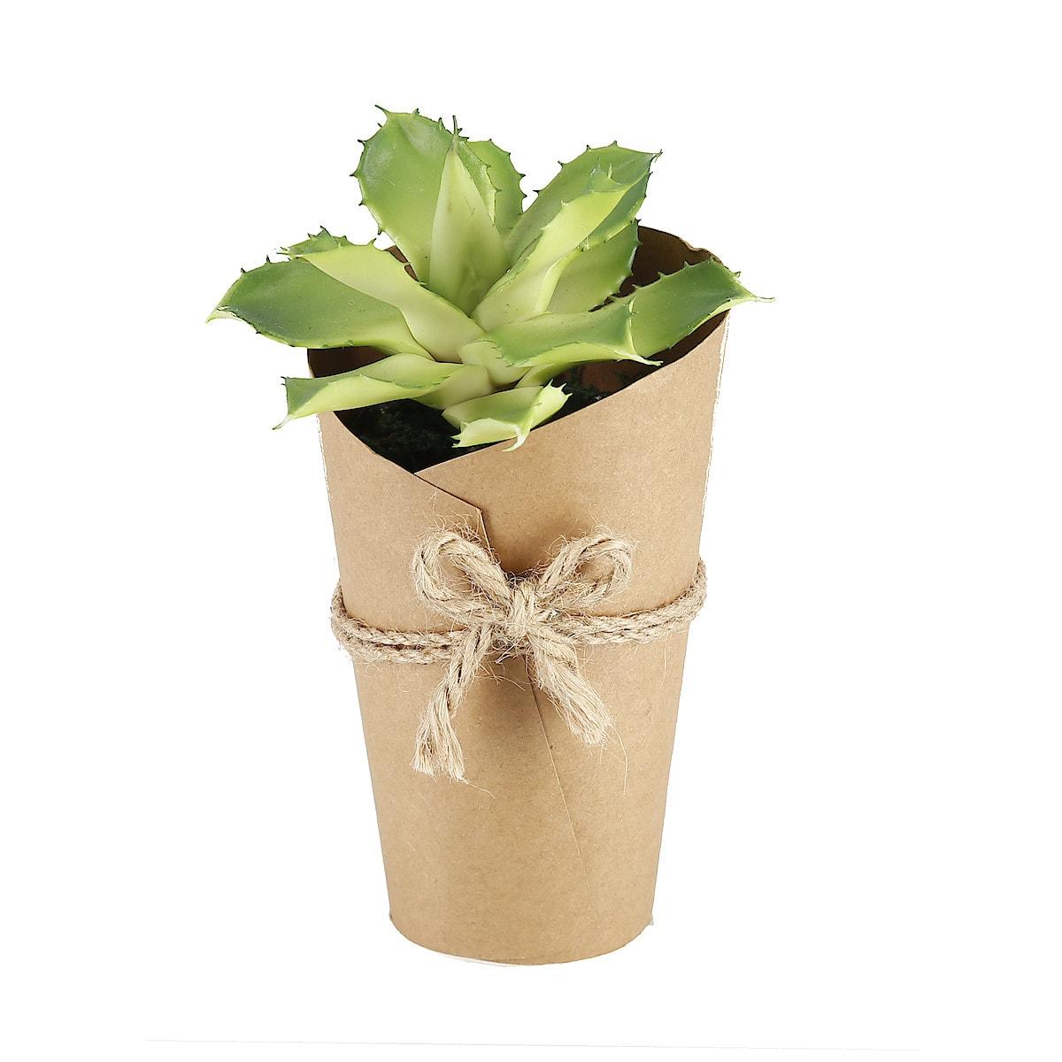18 cm Succulent