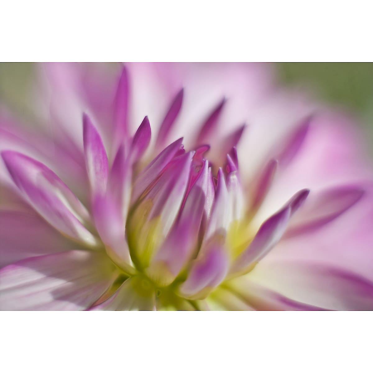Kuvat/postikortit Kukat