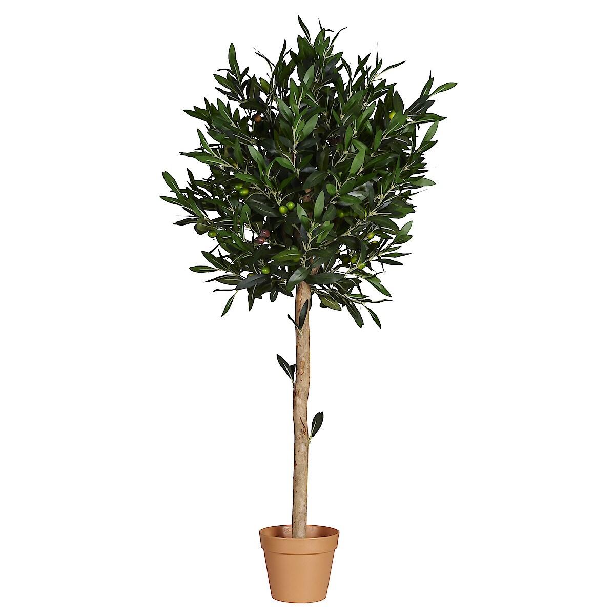 Olivträd 115 cm