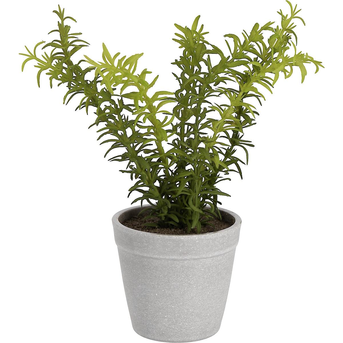 Kryddväxt konstväxt 24 cm