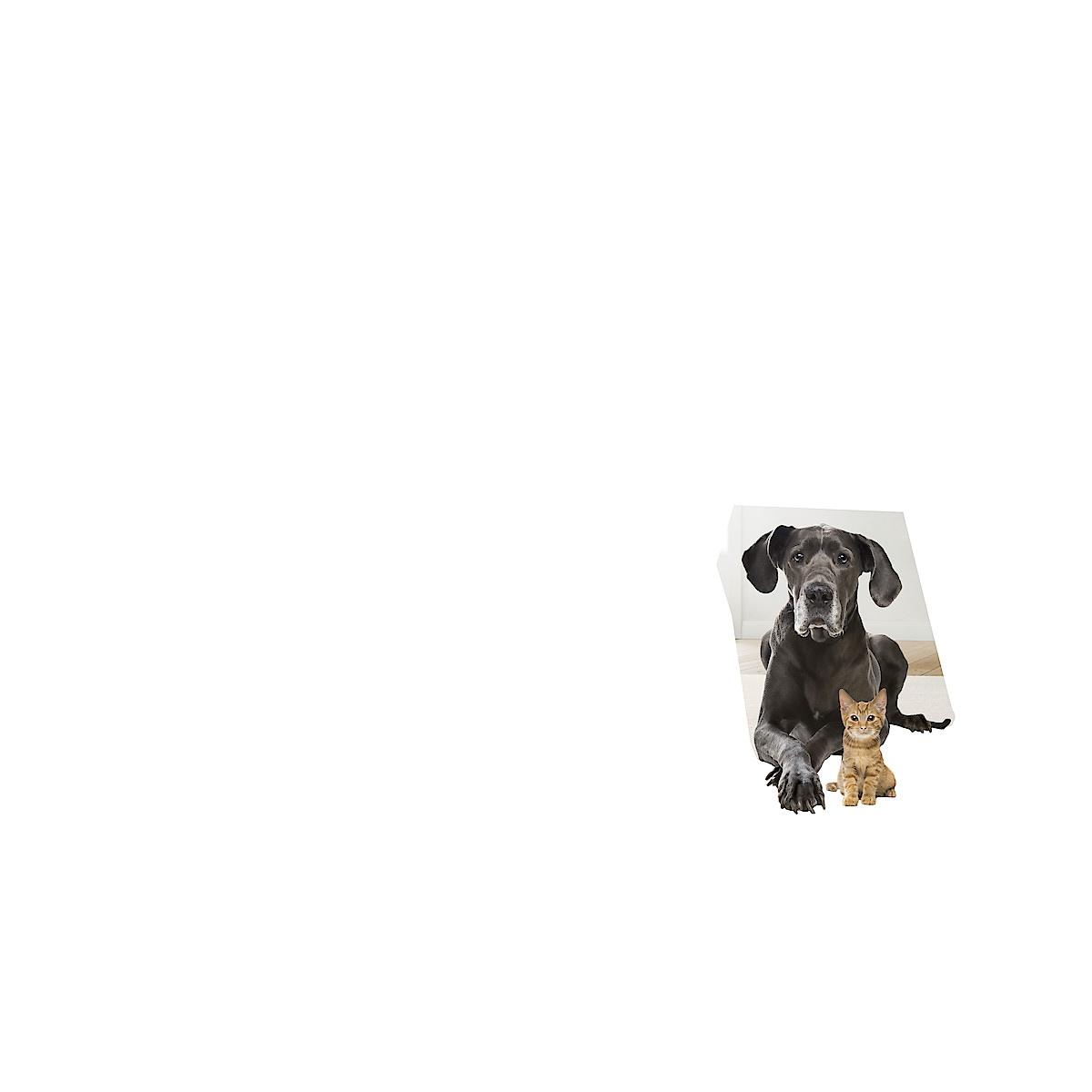 Varsi-imuri Bosch Zoo'o BCH6ZOOO