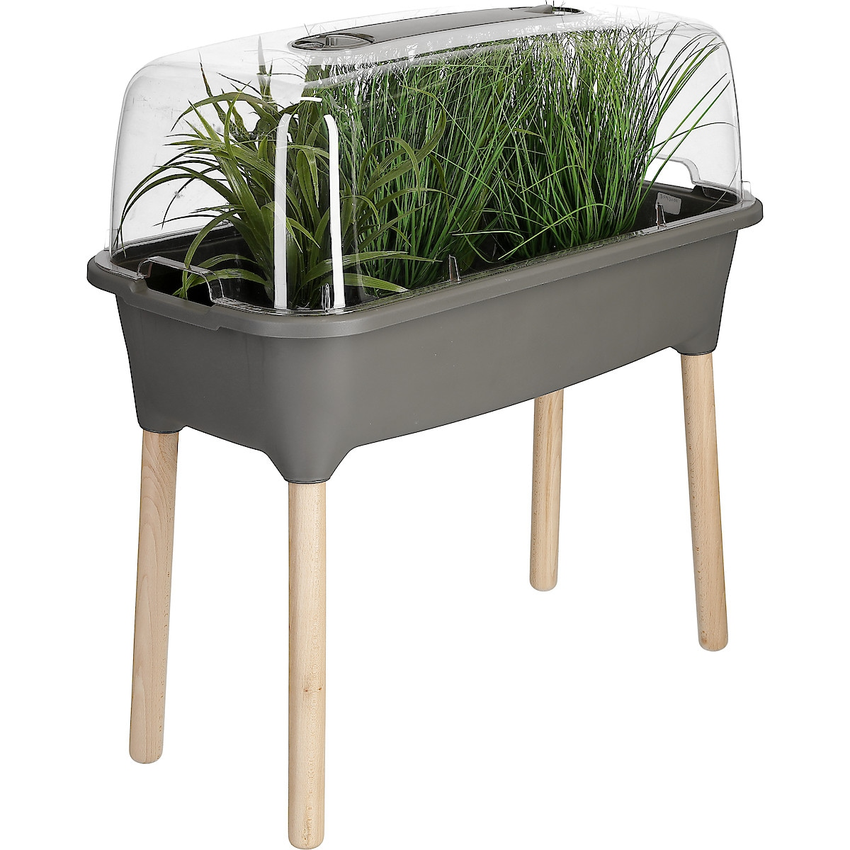 Miniväxthus för krukväxter
