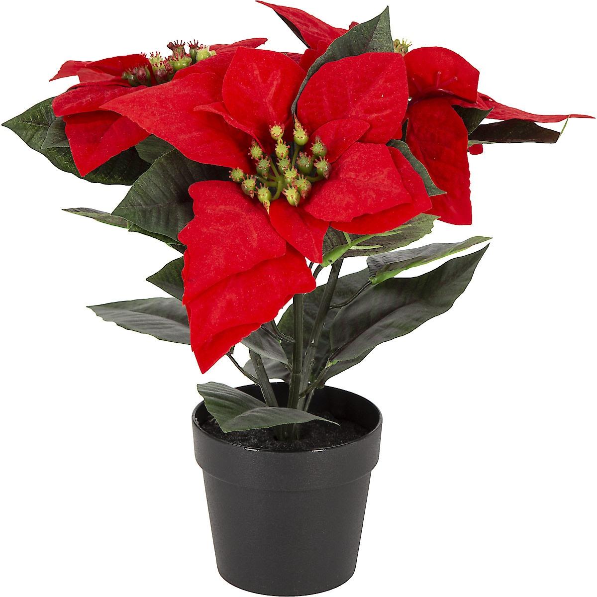 Julstjärna 30 cm
