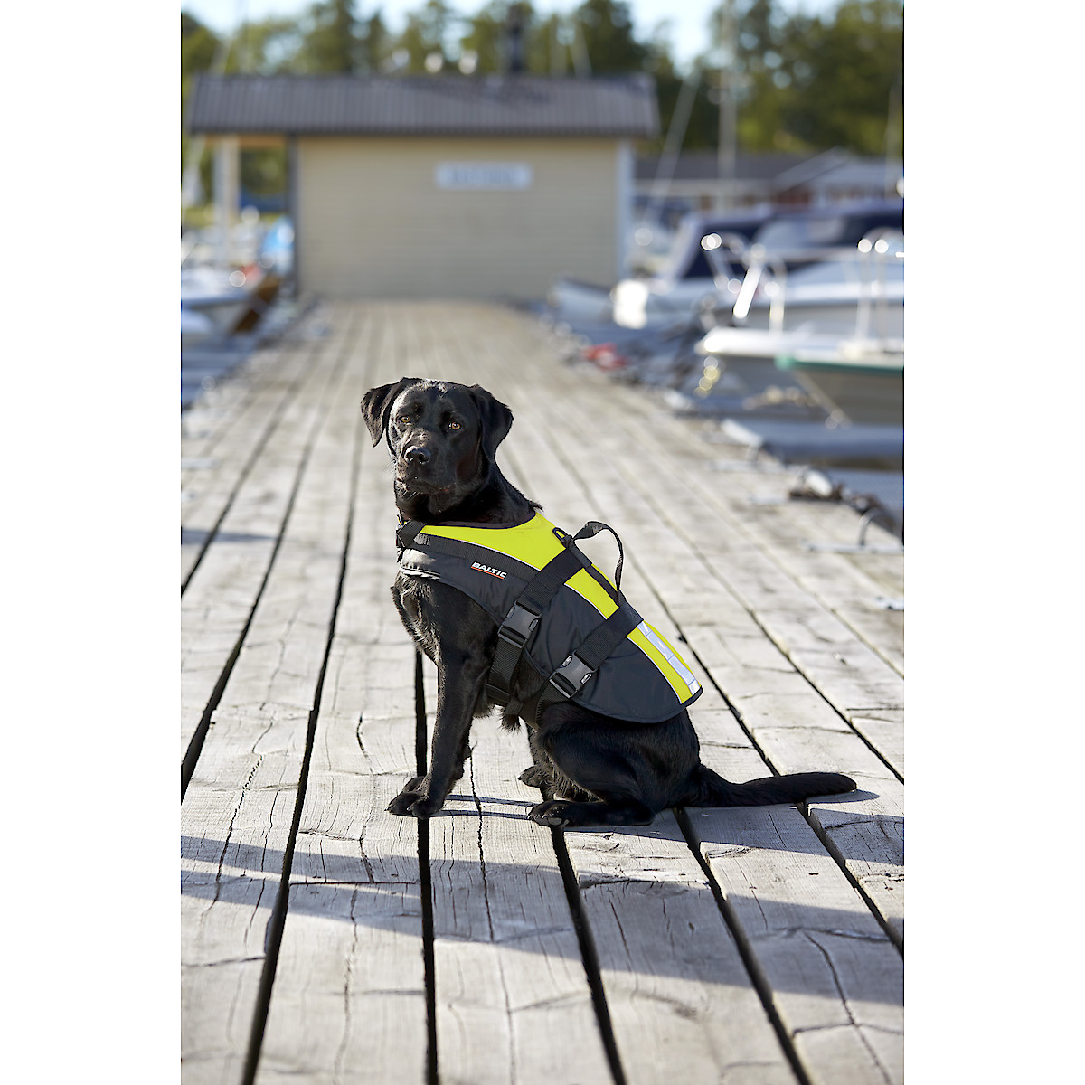 Pelastusliivi koiralle ja kissalle, Baltic Mascot